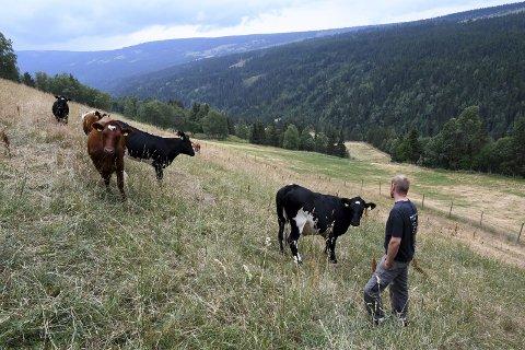 - Kan vi håpe at noen tar lærdom av sommeren 2018, eller må det bli flere kriser før vi lærer? spør Cecilie Sørli, styremedlem Oppland bonde og småbrukarlag. (Ill.foto)
