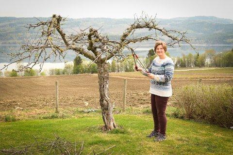 GI FRUKTEN LUFT OG LYS: Anette Hauger er ikke redd for å ta i når hun klipper epletrærne. Hun mener at det er viktigere med kvalitet enn kvantitet på eplene.