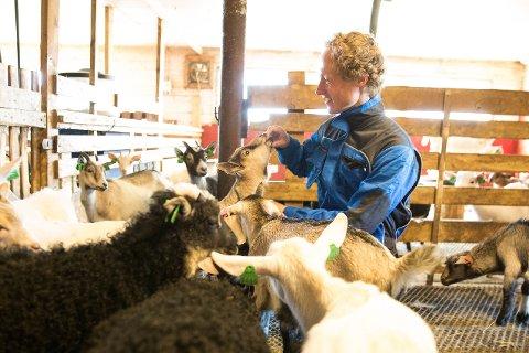 Ola Kaurstad og dei andre setereigarane i Griningsdalen meiner det byr på produksjonsmessige utfordringar med auka ferdsel i beiteområde.