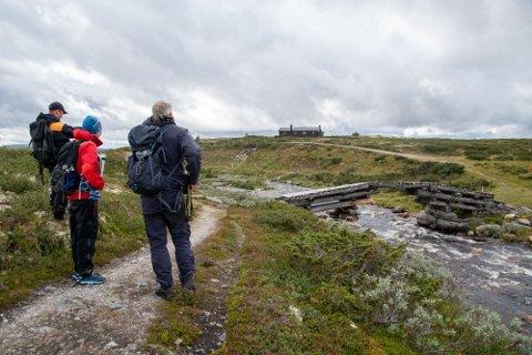 På befaring: Her er fra befaringen på Venabygdsfjellet der ny sti vurderes. Brua er over elva Mya. På bildet er Erik Hagen, Ringebu Fjellstyre, Liv Havik, DNT og Finn Bjormyr - SNO.
