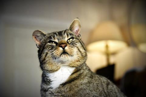 HVOR HAR DU VÆRT?: Av matmor Lene Furu omtales katten Gjest Baardsen som «en merkelig type», og ingen vet hva han holder på med under sine årlige sommerutflukter..