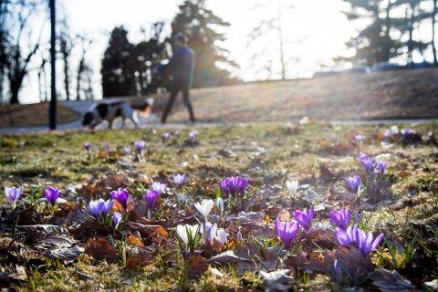 VÅRVÆR: Meteorologisk institutt varsler en vårlig start på påsken.