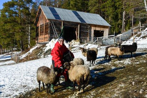 HARDE FRONTAR: Fride Gunn Rudi i Ringebu meinte ikkje å såra nokon, og synes det er uheldig at næringa gjer at gamle vener ikkje helsar på kvarandre lenger. På bruket på Kjøsås har familen 90 vinterfora søyer av ulike raser.