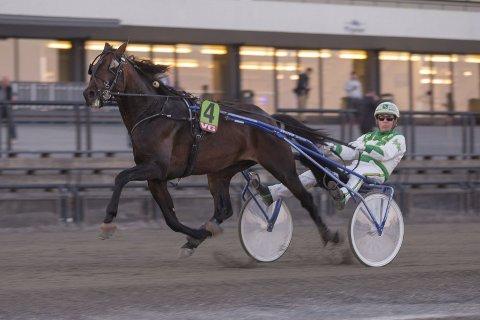 VANT: Phantasm Soa var en god og fortjent vinner av DNTs Auksjonsløp. Foto: Hesteguiden.com