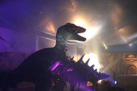 OMREISENDE DINOSIRKUS: Dino World Norge kommer til Gran med sitt omreisende show, som vil settes opp ved Lidskjalv.