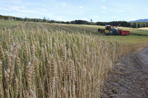 LANDBRUK: Fylkesmannen i Oppland presenterer ny statistikk for landbruket i fylket.