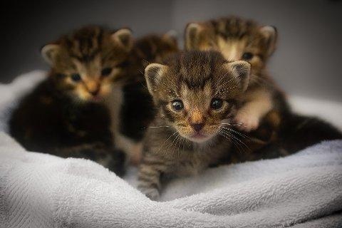 Kattunger: Det forekommer at folk spør etter levende dyr til slangefôr.