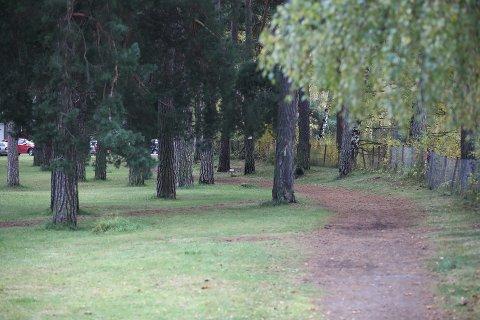 – ANGREPET PÅ TUR: Faren skal ha blitt slått, mens sønnen skal ha blitt dyttet da de var i Schjongslunden i Hønefoss 12. oktober.