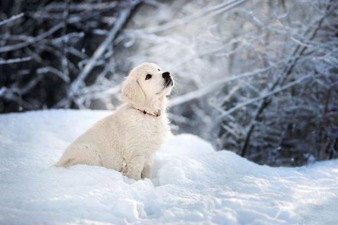 SITT, FIDO: Neida, norske hundeeiere er mer oppfinnsomme enn å kalle «menneskets beste venn» for Fido.