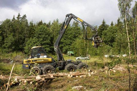 SAMLER SEG: Norske skogeiere vil investere i norsk skogindustri