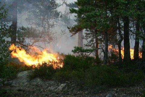 FARE FOR SKOGBRANN: Bildet er fra en tidligere skogbrann i områdene Aspedammen og Ertemarka. Nå frykter brannvesenet at det kan oppstå nye skogbranner i Halden og Aremark dersom folk ikke er forsiktige med ild i skog og mark.