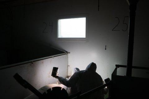 Aktivister fra Nettverk for dyrs frihet dokumenterer et forhold i bingen. De lyser opp den mørke bingen med to videolys. Bildet er ikke fra noen av gårdene i Halden.
