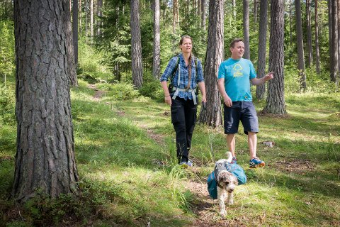 VANDRING: Trude Myhre vandrer gjennom skogen med Coco. I Hamar fikk hun følge av seniorforsker og professor Vegar Bakkestuen.
