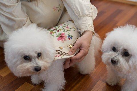 GLADE: Draktene monteres på hundene. Hundene virker glade for å få de på. Nå skjer det endelig noe utenom det vanlige.