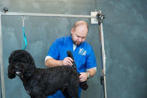 PLEIE: Puddelen Felix får pleie av Sombor Vizi hos Vizi Dog Studio. Han er nøye med renhold selv om dyr antas ikke å være smittekilde for koronaviruset.