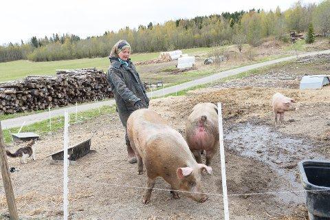 KOMBINERER: – Jeg har kombinert det beste fra konvensjonelt grisehold med det økologiske, sier Guro Sveberg.