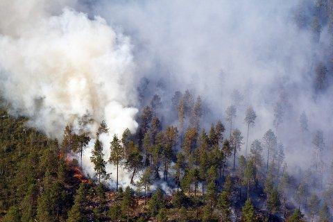 Obs-varsel: Lørdag kveld sendte Meteorologisk institutt ut OBS-varsel om skogbrannfare.