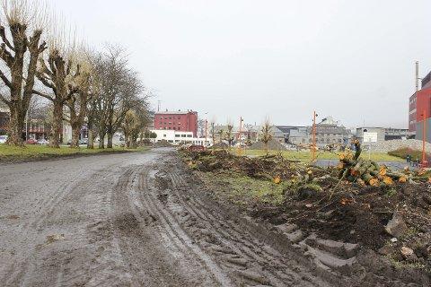 Trefelling: Her har Odda kommune fjerna tre for å gjera plass til ein midlertidig veg der trafikken kan gå når det blir arbeid med nytt kryss på riksvegen. Foto: Synnøve Nyheim