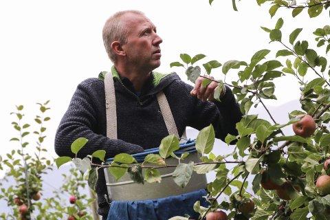 Inn i hovedstyret: Kjetil Lerfall er valgt til nytt styremedlemm i Gartnerhallen SA. Han er i dag ogsåp styreleder for Hardanger fjordfrukt og driver gard på Alsåker. Arkivfoto: Inga Jaastad Øygard