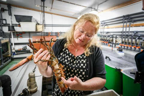 Hummerforsker Ann-Lisbeth Agnalt ved Havforskningsinstiuttet med den aktuelle hummeren.