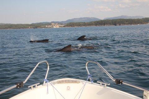 Omringet av hval på alle kanter.