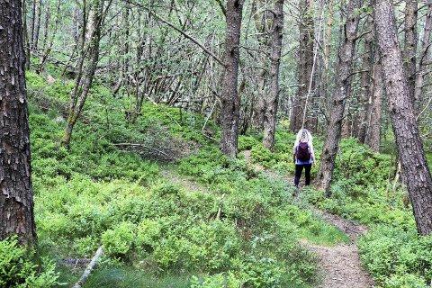 Skogstur:  En rolig og fin turløype.Foto: Lars KR. GJERDE