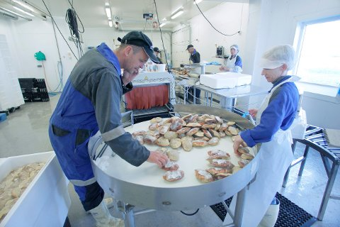 KRABBERENS: Daglig leder, Jacob Sørhaug, sjekker kvaliteten på de fylte krabbeskallene under produksjon ved Åkra Sjømat.