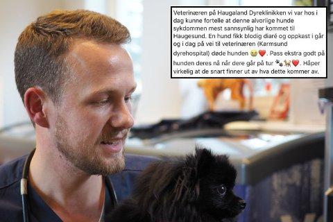 IKKE BEKREFTET: Det er ikke bekreftet noe sykdomsutbrudd på Haugalandet, forteller veterinær Felix Lande. Hunden på bildet har ikke noe med saken å gjøre.