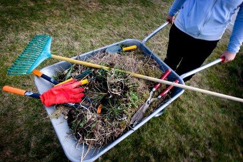NÅ MÅ DU LEVERE DET SELV: Etter nyttår må du selv kjøre hageavfallet til miljøparken. Fem tilhengerlass er gratis.