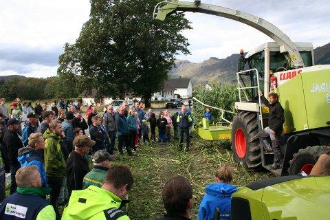 MYKJE FOLK: Mange bønder og andre interesserte møtte fram då haustinga av maisåkeren ved tidlegare Etne planteskule gjekk unna på nokre timar onsdag.