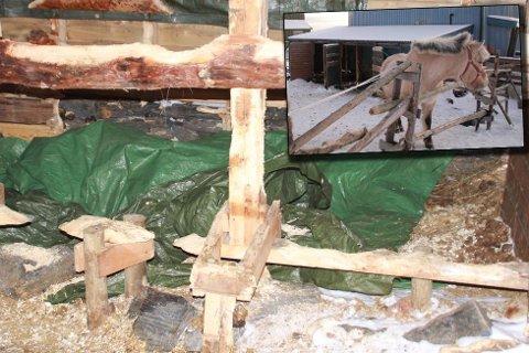 To hester døde av sult i Gamvik, to gjenlevende hester sendes fra stallen torsdag. Foto: Kåre Grip