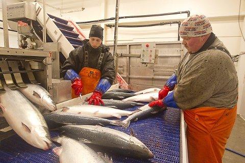 Nye markeder: Russerne vil ikke lenger kjøpe norsk fisk, men økningen i andre markeder veier opp for det.