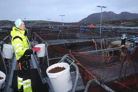 FÔRINGSTID:  Kine Johanne W. Grønning er en av flere ansatte ved havbruksstasjonen på Solfjellsjøen. Her sørger hun for at fisken får mat. Foto: Jarl G. Sandholm