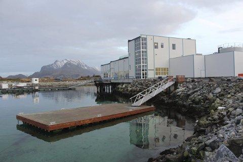 JOBB: Svært mange av herøyfjerdingenes nye landsmenn har jobb ved Marine Harvests fabrikk på Hestøya. Foto: jarl G. Sandholm
