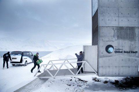 Mer frø:Til sammen sju kasser med frø fra Japan og USA ankom frøhvelvet på Svalbard. Foto: Heiko Junge / NTB scanpix