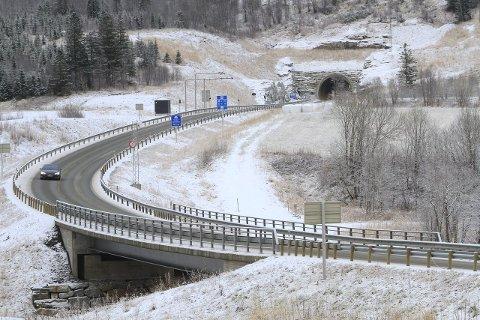 HUND: En løs fuglehund ble obeservert på fylkesvei 78 i Leirfjord.