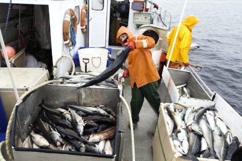 KONTROLL: Midt Helgeland Fiskarlag vil ikke ha noen nyetableringer i oppdrettsnæringen før lakselusproblemet er løst. Illustrasjonsfoto: Inge Ove Tysnes