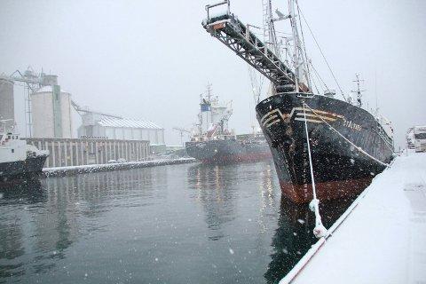 HELGELAND HAVN: Fra Mosjøen havn