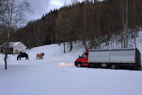 NÆRE PÅ: Lastebilen ser ut til å ha sklidd i grøfta like ved hestene til Eirin Horrigmoe, men hestene forholder seg rolige til hendelsen.