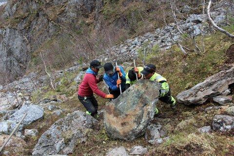 Hele laget på fire må til for å velte denne store steinen.