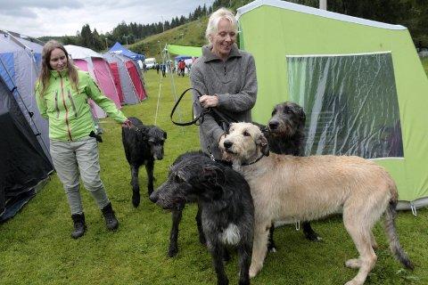 Gigantisk: Olaug Heggnes og Hilde Lorentsen med fire eksemplarer irsk ulvehund. Den største er 90 cm høy.