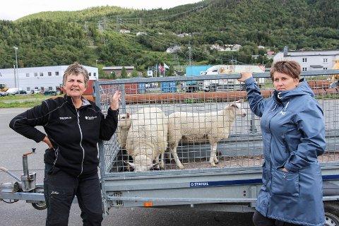 FERJETUR: Kari Grøva overleverte tirsdag den langveisfarende søya og to lam til Berit Hundåla (t.v.) på ferjekaien i Mosjøen.