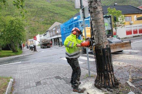 LETTVINT: Tom Roger Hansen sager over trestammen, mens Terje Vesterlid i ei gravemaskin sørger for å holde fast i treet slik at det ikke faller ukontrollert over ende.