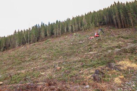HOGST: Allskog har tatt ned mye tømmerskog i Vallia.