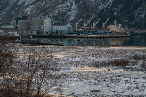 Miljørapporten fra  Norsk saneringsservice AS slår fast at det finnes betydelige mengder bark og trevirke i bakken på Nesbruktomta.