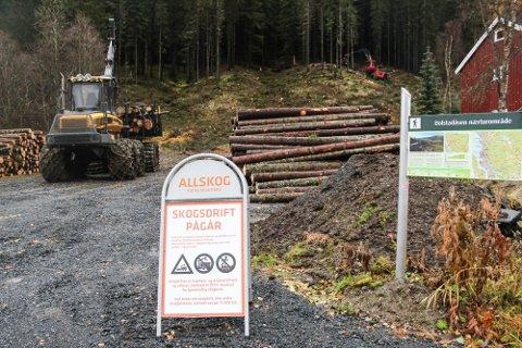 MER ARBEID: Allskog har startet opp med hogst og rydding i Vallia. De ønsker å bruke taubane for å ta ned virke fra området.
