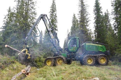 BYGGESTART: Rune Brennbakk AS i Hattfjelldal har fått jobben med å rydde skogen til storflyplassen på Hauan i Rana. Hogstmaskinen, som skal rydde flyplassområdet, hogger mellom 100 til 150 trær i timen.