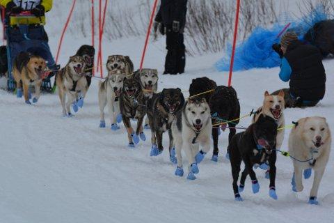 Disse 14 hundene ligger nå ute til salg, og spannet selges samlet, melder Steinar Kristensen på Facebbok.