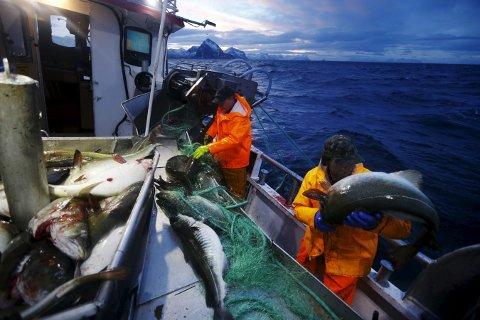 Skipper Trond Dalgård (51) Fiskerne bør betale en avgift til fellesskapet for å få lov til å høste av fisken i havet, foreslår et regjeringsoppnevnt utvalg. Foto: Cornelius Poppe / NTB scanpix