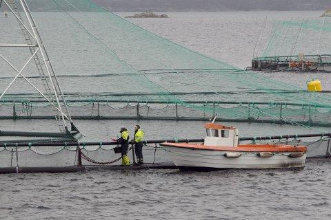 Omfanget av fiskeoppdrett må veies nøye opp mot de uunngåelige effektene det har på naturen omkring. Her fra Trolls oppdrettsanlegg Skjerholmen på Buarøy sør for Flesland. Foto: Heiko Junge / NTB scanpix